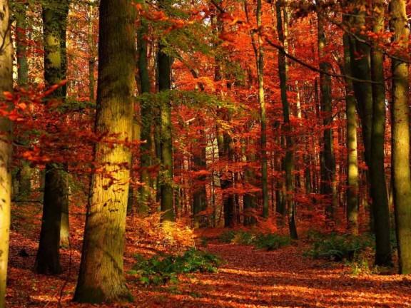 Il legno materiale antisismico per eccellenza